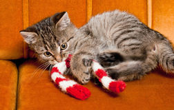 Tiny furball cutie. Shot of gorgeous, cute, funny little tabby kitten Royalty Free Stock Photography