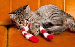 Tiny furball cutie. Royalty Free Stock Photography