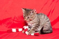 Tiny furball cutie. Royalty Free Stock Photos