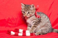 Tiny furball cutie. Shot of gorgeous, cute, funny little tabby kitten Stock Photos