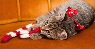 Tiny furball cutie. Shot of gorgeous, cute, funny little tabby kitten Stock Images