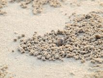 Tiny Ghost Crabs digging holes in the sand. Nature stock images
