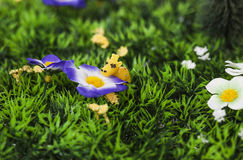 Tiny giraffe smelling artificial flower Stock Photos