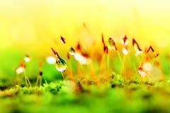 Tiny grass Stock Photography