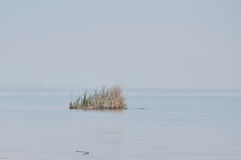 Tiny grass island on great lakes, taken in rochester Stock Photo
