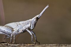 Tiny grasshopper Stock Image