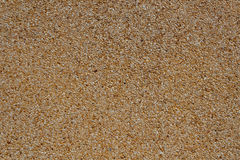 Tiny gravel texture on brown wall  Royalty Free Stock Photo