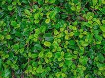 Tiny green leaf texture wallpaper royalty free stock photos