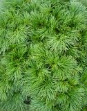 Tiny green leaves Royalty Free Stock Photo