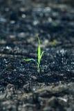 Tiny green plant Stock Photos
