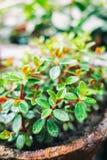 Green leaf background. Tiny green plant leaf background. Macro photo stock photos