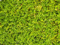 Tiny green plants background. Detail of tiny green plants stock image