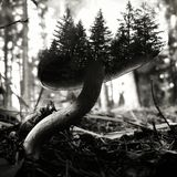 Minature Forrest Fungus Stock Photography