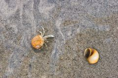 Tiny hermit crab crawling under water on sand Royalty Free Stock Image