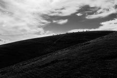 Tiny horses silhouettes Stock Photo