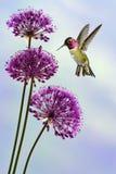 Tiny Hummingbird in the Garden Vertical Image Stock Photos