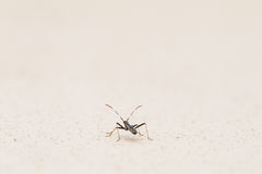 Tiny insect Stock Images