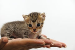Tiny kitten - animal protection concept Royalty Free Stock Photos