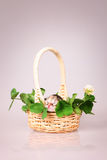 Tiny kitten in basket Royalty Free Stock Photos