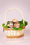 Tiny kitten in basket Royalty Free Stock Images