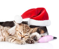 Tiny kitten and basset hound puppy in red santa hat. isolated Stock Photography