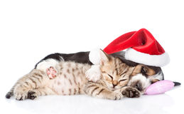 Tiny kitten and basset hound puppy in red santa hat sleeping together.  on white Stock Image