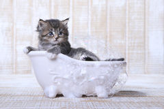 Tiny Kitten in a Bathtub With Bubbles Royalty Free Stock Images