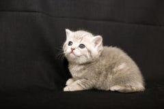 Tiny kitten on a dark background. Royalty Free Stock Photography