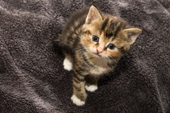 Tiny kitten Stock Photography