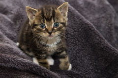 Tiny kitten Royalty Free Stock Images