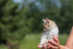 Tiny kitten in a petting zoo Royalty Free Stock Photography
