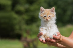 Tiny kitten in a petting zoo Royalty Free Stock Images
