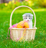 Tiny kitten sitting in a basket with clews of colored wool Royalty Free Stock Photo