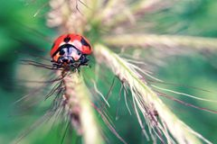Tiny ladybug Royalty Free Stock Photo