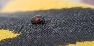 Tiny ladybug stock photos