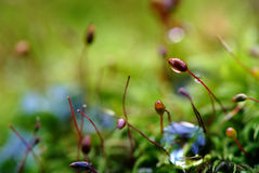 Tiny landscape. With drops of rain royalty free stock image
