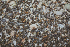 Tiny and large sea shell and rocks texture background Royalty Free Stock Images