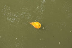 Tiny leaf float Royalty Free Stock Photos