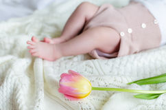 Tiny little baby's feet in woolen shorts with tulip flower ahead Stock Photo