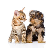 Tiny little kitten and puppy looking at each other. On white Stock Photo