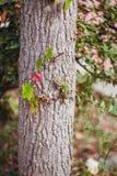 Tiny lizard outdoors royalty free stock photography
