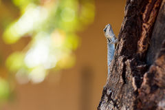 Tiny lizard sitting on branch royalty free stock image