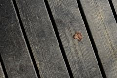 A tiny lonely leaf on wooden floorboards royalty free stock photo