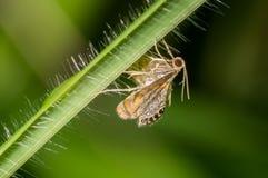 A tiny moth Royalty Free Stock Image