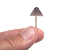 Tiny mushroom Stock Photography