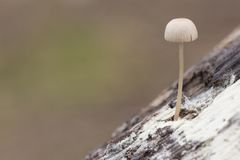 A tiny mushroom on a log royalty free stock photos