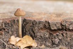 A tiny mushroom stock photos