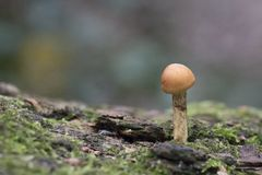 A tiny mushroom on Southampton Common Stock Photos