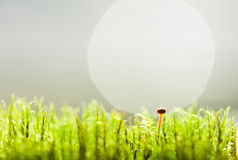 Tiny mushroom Royalty Free Stock Photography