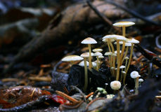 Free Tiny Mushrooms Toadstools And Green Grass Stock Photos - 45556023